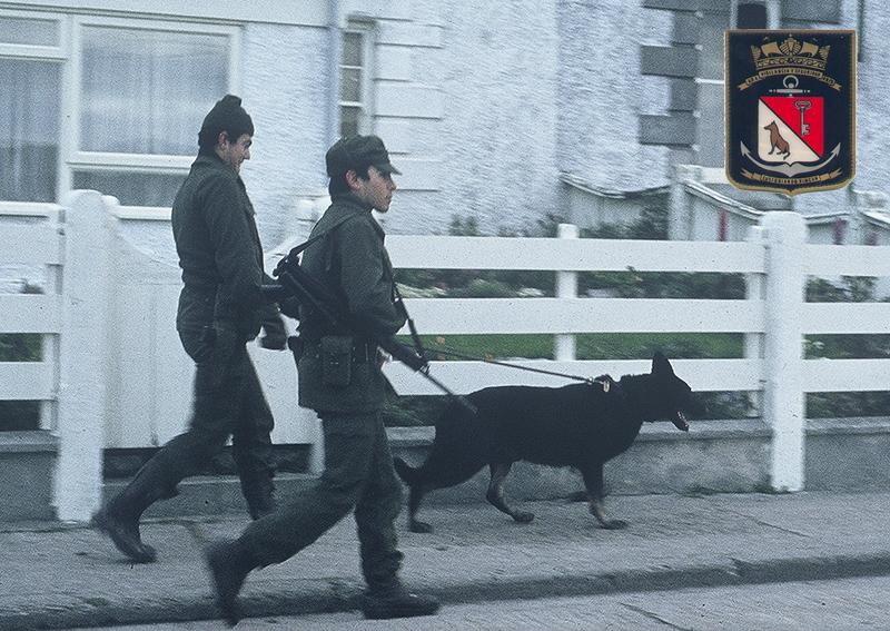 Seccion perros en Malvinas